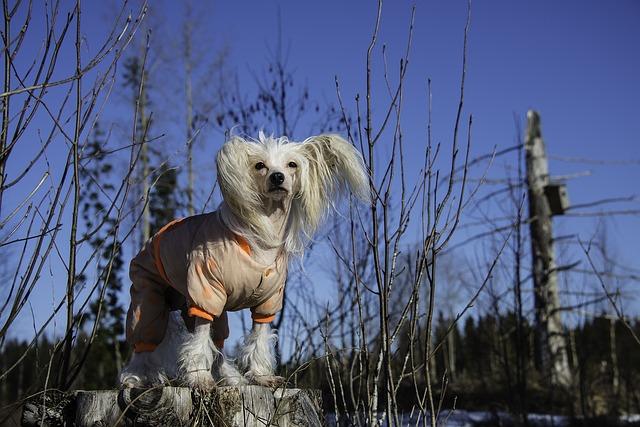 Psy a pravidelné prechádzky
