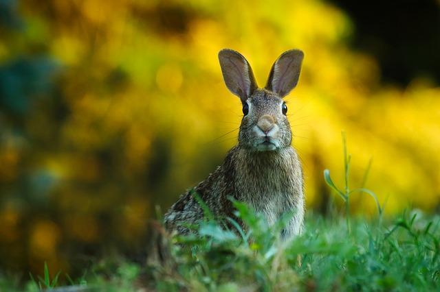 Čo spraviť aby Váš králik žil dlhšie?