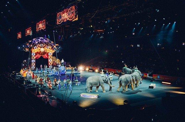 Cirkus – áno alebo nie?