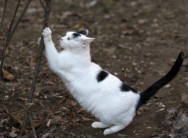 Mačky musia škriabať !