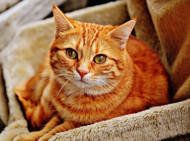 Doprajte svojej mačke maximálne pohodlie a miesto bezpečia!